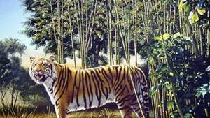 Kan du spotte 'The hidden tiger' i billedet? Foto: Playbuzz