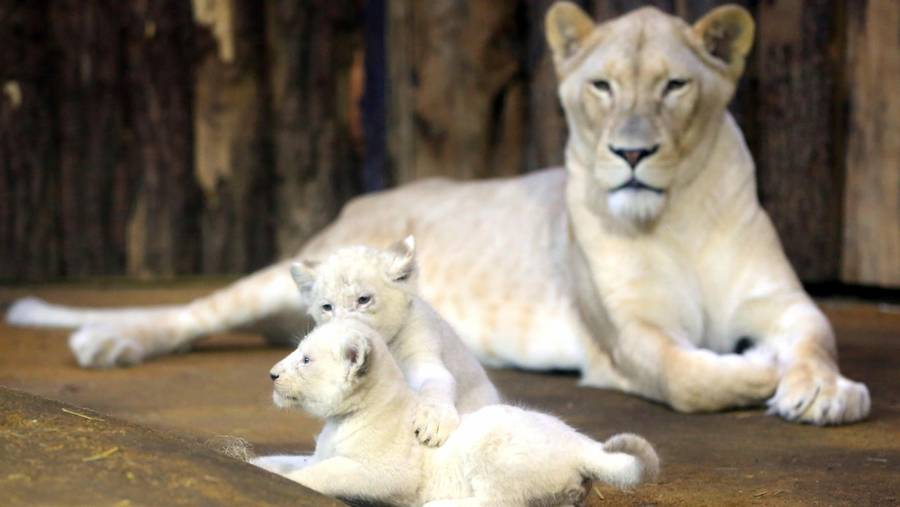 zoo herning Haderup piger