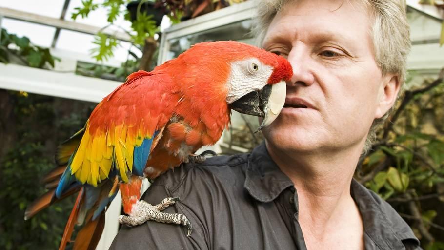 d7b090e9eab5 Pippi Langstrømpes papegøje er død – Ekstra Bladet