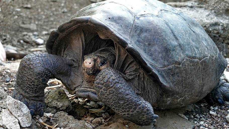 skildpadde dating