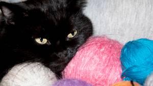 En sort kat som denne døde af sine skader, efter en hundeejer smed den ind i en busk. Modelfoto: Colourbox