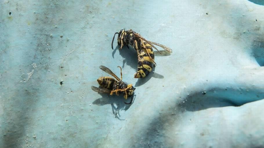 hvepsestik kløe