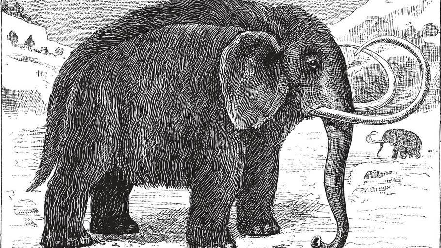 elefant på engelsk