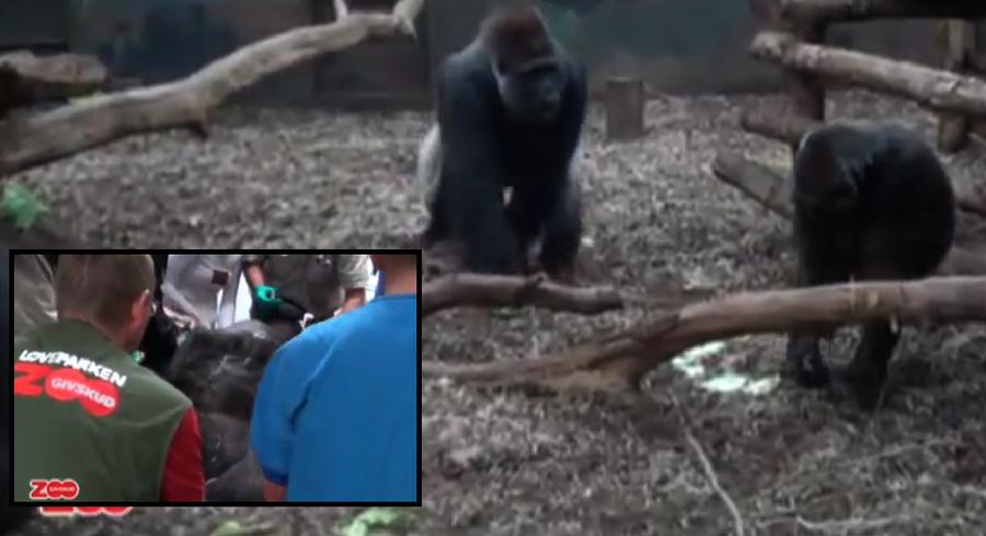 zoo i sjælland mand til mand massage