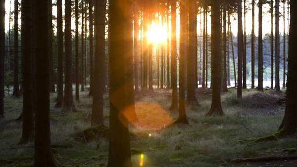 463d6fbc1ab Efteråret kommer ifølge prognosen til at invitere til en tur i skoven.  (Foto: