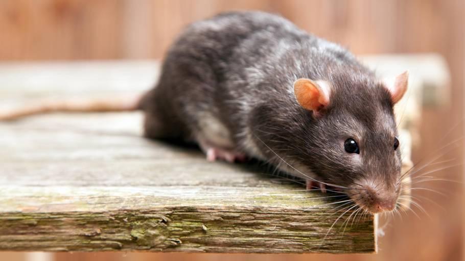 rotter forsikring