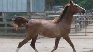 Dopingmistænkt hest frikendt i bizar sag