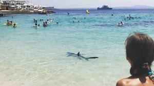 En haj kom ualmindeligt tæt på badende turister. Heriblandt en gruppe svenskere, som fortæller, at det hele mindede om en scene fra Dødens Gab. Foto: Privat