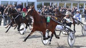 'Spids og slut' kaldes det i travsporten, når en hest fører fra start til mål. Det gjorde Stand And Deliver i Skive. Foto: Flemming Andersen.