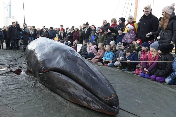 Sprjten og hvalen