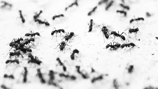myrer i huset
