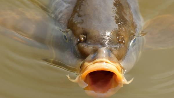 der er mange fisk i havet dating dating nord ayrshire