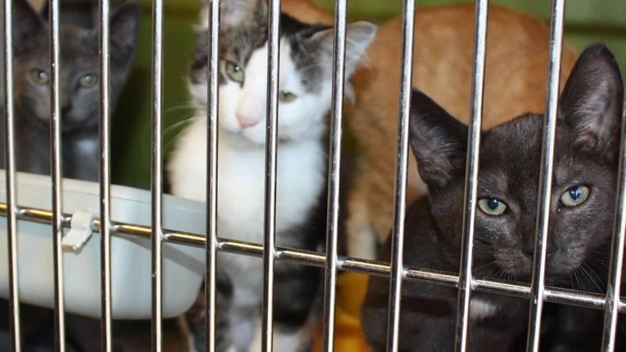 hårede katte rør