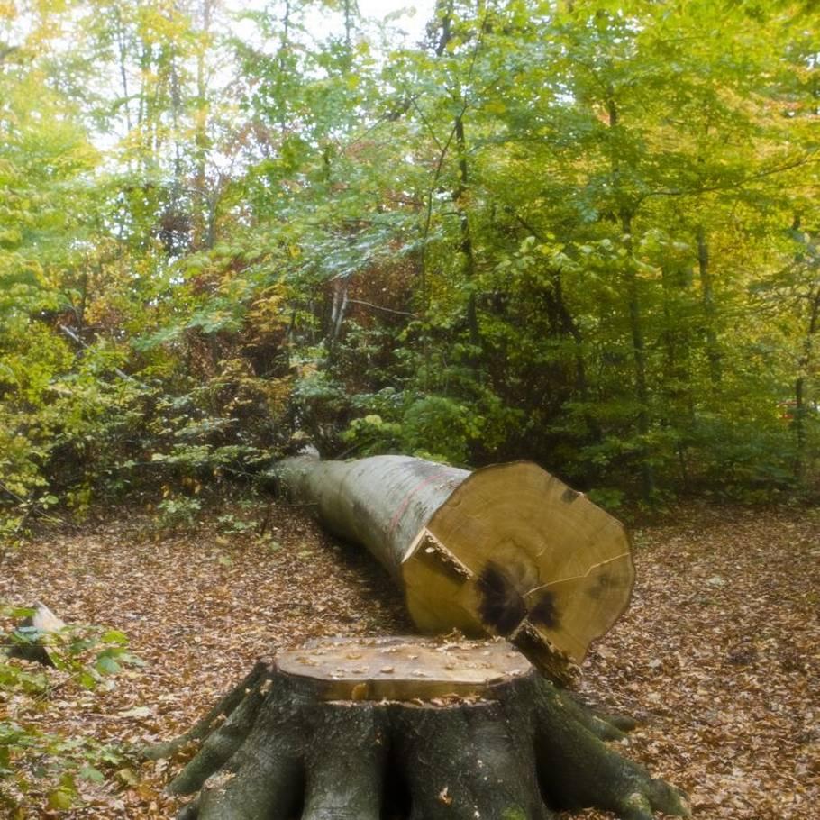 fældning af træer i skel